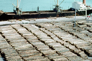 Logs at port to be loaded for export